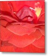 Yellow-striped Red Rose Metal Print