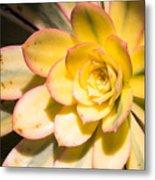 Yellow Succulent Metal Print