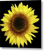 Yellow Sunflower Isolated On Black Background 8 Metal Print
