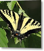 Yellow Swallow Tail Butterfly Metal Print