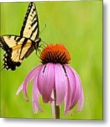 Yellow Swallowtail On Cone Flower Metal Print