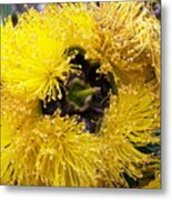 Yellow Tree Flower Metal Print