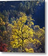 Yellow Tree In Sunlight Metal Print