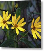 Yellow Trined Metal Print