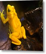 Yellow Tropical Frog Metal Print