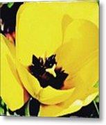 Yellow Tulip 2 Metal Print