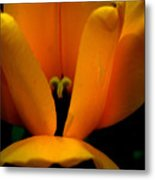 Yellow Tulip Metal Print
