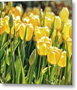 Yellow Tulip Panoramic Metal Print