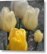 Yellow Tulips 2 Metal Print