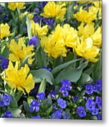 Yellow Tulips And Violets Metal Print