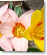 Yellow Tulips Art Prints Pink Tulips Spring Florals Baslee Troutman Metal Print