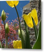 Yellow Tulips By Stone Church Metal Print