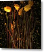 Yellow Tulips Decaying At Sunset Metal Print