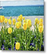 Yellow Tulips Near Lake Metal Print