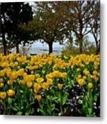 Yellow Tulips Of Fairhope Alabama Metal Print