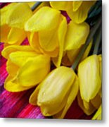 Yellow Tulips With Dew Drops Metal Print