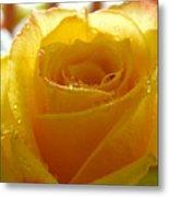 Yellow Valentine Roses - 4 Metal Print