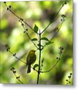 Yellow Warbler In A Tree 2 Metal Print