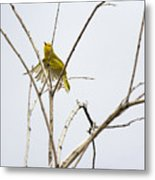 Yellow Warbler In Flight Metal Print