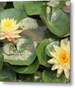Yellow Water Lillies Metal Print