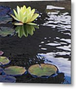 Yellow Water Lily Metal Print