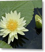 Yellow Water Lily With Bud Nymphaea Metal Print by Heiko Koehrer-Wagner