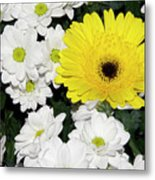 Yellow White Flowers Metal Print