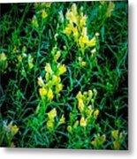 Yellow Wild Flowers In Late Summer Metal Print