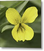 Yellow Wild Violet Metal Print