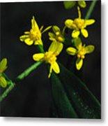Yellow Wildflower Metal Print
