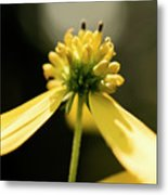 Yellow Wildflower Metal Print