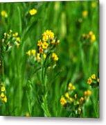 Yellow Wildflower Photograph Metal Print