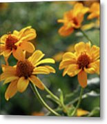Yellow Wildflowers 3680 H_2 Metal Print
