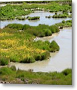 Yellow Wildflowers At Mud Volcano Area In Yellowstone National Park Metal Print