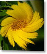 Yellow Wonder Metal Print