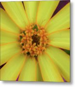 Yellow Zinn Metal Print