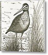 Yellowlegs Shorebird Metal Print