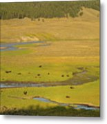 Yellowstone Bison 2 Metal Print