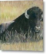 Yellowstone Loner Metal Print