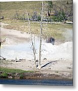 Yellowstone Park Bisons In August Metal Print