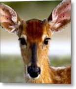 Yes Deer Metal Print