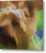 Yorkie In The Grass - Painting Metal Print