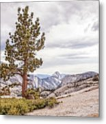 Yosemite Tree Metal Print