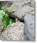You Can't See Me Metal Print