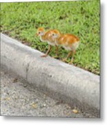 You First. No You Go First Metal Print