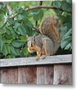 You Looking At Me Metal Print