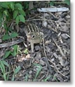 You There - Ground Squirrel Metal Print