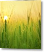 You'll Remember Me When The West Wind Moves Upon The Fields Of Barley Metal Print