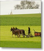 Young Amish Farmer Metal Print