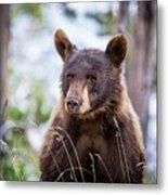 Young Black Bear Metal Print